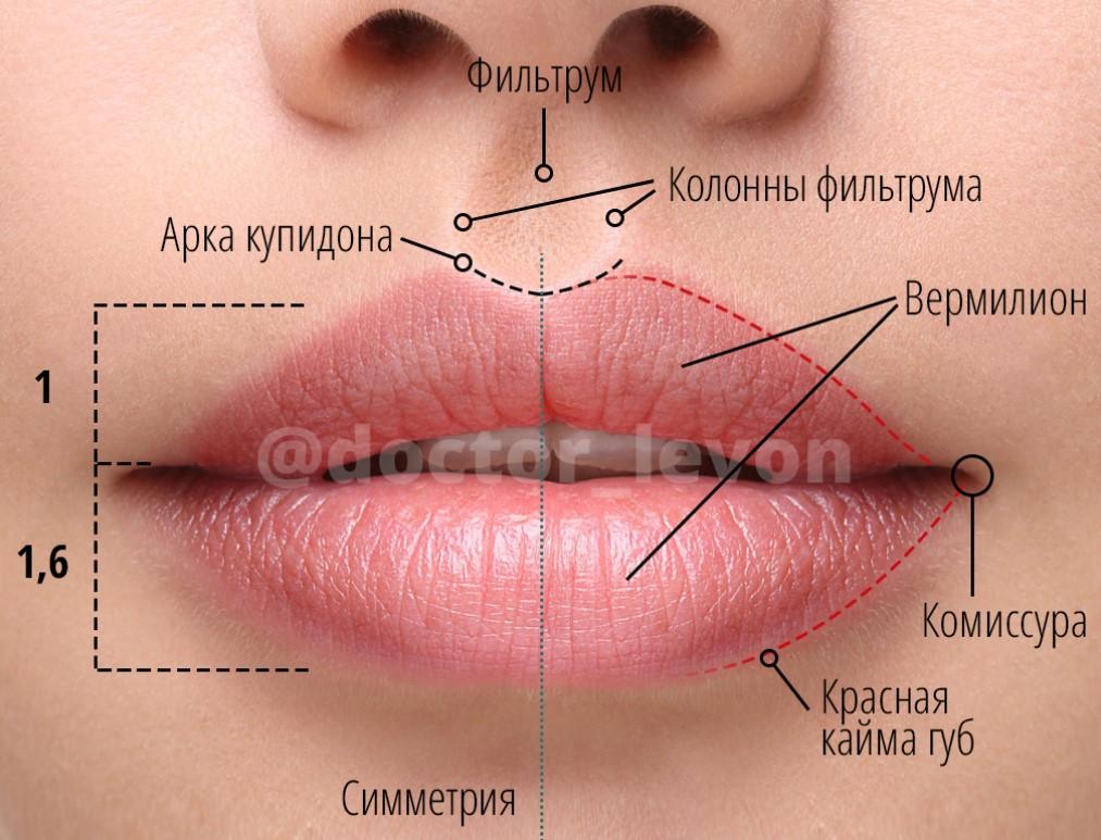 Какая форма губ будет в моде в 2020 году? Тренды года, фото